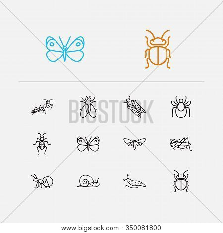 Insect Icons Set. Beetle And Insect Icons With Mantis, Snail And Honey Ant. Set Of Cartoon For Web A