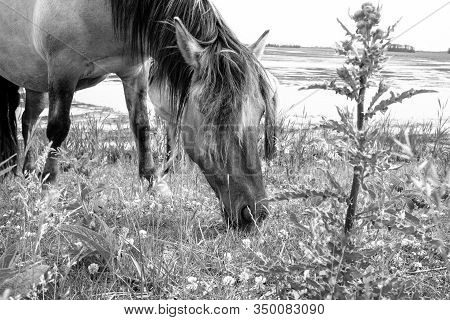 Two Beautiful Horses Grazing On Pasture With Scenic View At Background