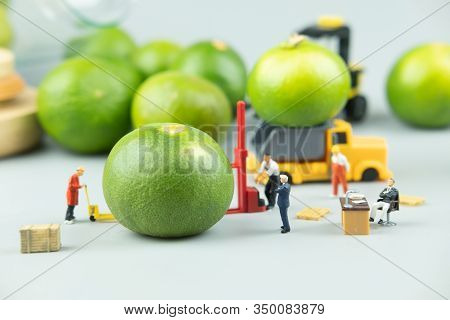 Miniature People Workers Moving Fresh Green Lime Fruit  For Export Agriculture. Concept Of Export
