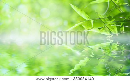 Bamboo Leaves, Green Leaf On Blurred Greenery Background. Beautiful Leaf Texture In Sunlight. Natura