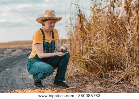 Disappointed Female Corn Farmer In Bad Condition Cornfield After Poor Harvest Season Of Crops