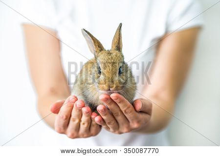 A Small Red Rabbit In Human Hands. The Concept Of Animal Protection And Conservation. Bunny Close-up