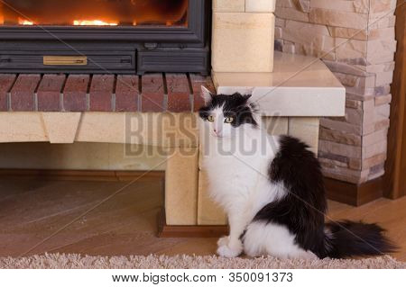Cat Sits By The Fireplace In The House