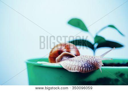 Cosmetics And Snail Mucus. Cosmetology Beauty Procedure. Cute Snail Near Green Plant. Natural Remedi