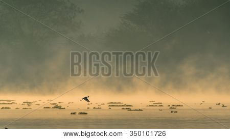 A Silhouette Of A Bird Flying Over A Lake During Beautiful Sunrise And Mist Rising Over Water