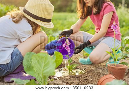 Children Girls Planting Flowering Pot Plant In Ground. Little Beautiful Gardeners In Gloves With Gar
