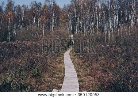 Path Through Swamps
