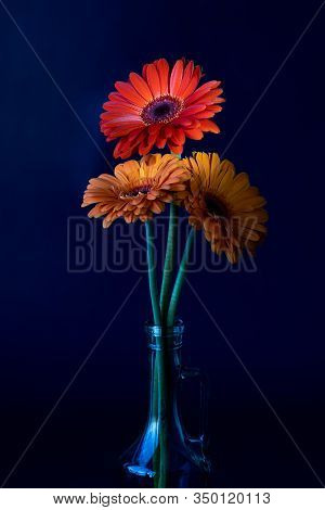 Three Gerbera Flowers In A Glass Bottle On A Deep Blue Background. Two Gerbera Flowers Are Orange, O