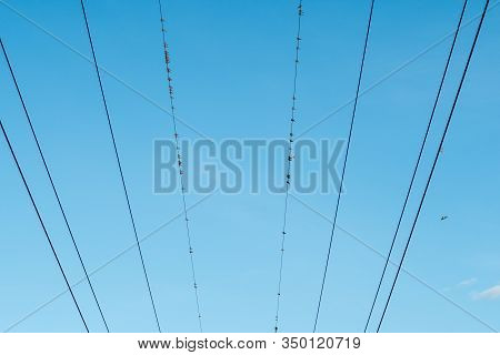 Birds Sitting On Cables Of Power Lines Over Sky