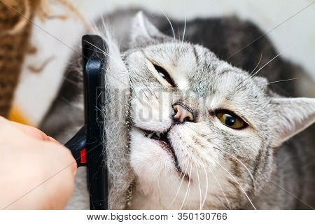 Close-up View Of Slicker Brush Combing Cat Hairs, Selective Focus