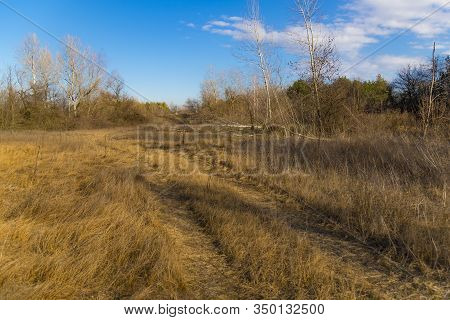 Steppe Forest , Forest-steppe, At Early Spring At Nice Sunny Day. Winding Dirt Road Among The Dry Gr