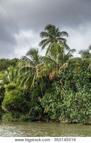 Nawiliwili, Kauai, Hawaii, Usa. - January 16, 2020: Palm And Other Trees Along Greenish South Fork W
