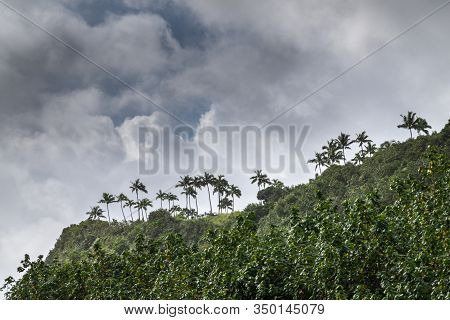 Nawiliwili, Kauai, Hawaii, Usa. - January 16, 2020: Palm Trees On Hill Above And Along Greenish Sout