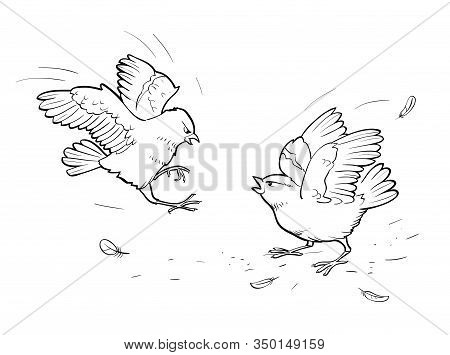 Vector Illustration Of Two Angry Sparrows. Birds Fight On White Background. Coloring Page