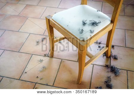 Tufts Of Black And Grey Hair Curls On A Wooden Chair And On The Floor From A Self Made Hair Cut At H