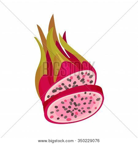 Halved Pitaya Or Dragon Fruit Covered With Leathery Leafy Skin Vector Illustration