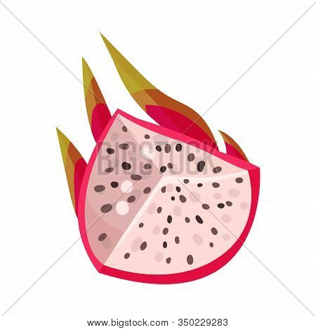 Pitaya Or Dragon Fruit Cut Section Covered With Leathery Leafy Skin Vector Illustration