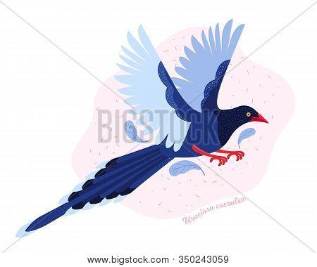 Taiwan Azure Magpie. Animals Of Taiwan. Urocissa Caerulea. Cute Blue Bird A Flying In The Sky. Exoti