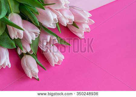 Bouquet Of Pink Tulips For The Holidays. Womens Day, Valentines Day, Name Day. On A Pink Background.