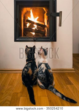 Two Cats Looking At Flames Fire Wood In Open Fireplace. Curious Calico Cats Are Observing Flames In