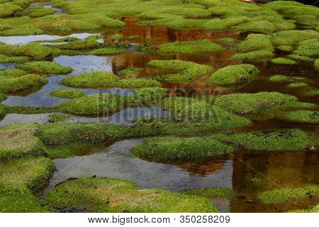 Laguna Negra, A Marvelous Lagoon Where Llamas Graze Situated Among The Corrugations Of The Rocks Of