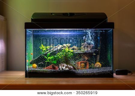 Small Fish Tank Aquarium With Colourful Snails And Fish At Home On Wooden Table. Fishbowl With Fresh