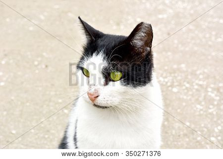 The Portrait Of Street White Spotty Cat With Green Eyes