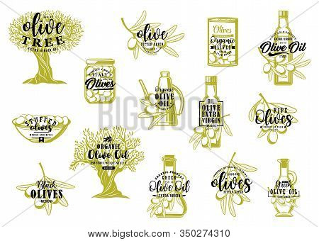Olive Oil, Tree And Fruit Sketch Lettering Of Farm Food Vector Design. Green Olives And Branches, Oi