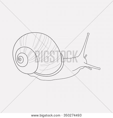 Snail Icon Line Element. Vector Illustration Of Snail Icon Line Isolated On Clean Background For You