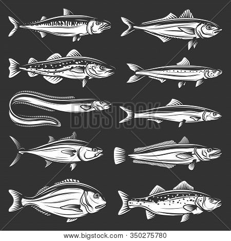 Sea Fish Icons Of Seafood Animals Vector Design. Tuna, Salmon And Mackerel, Marine Eel, Pilchard And