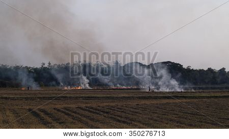 Slash-and-burn Agriculture. Fire-fallow Cultivation. Fire-fallow Cultivation. Air Quality Policy .cl