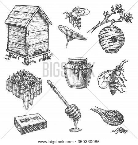 Honey And Apiary Beekeeping, Vector Sketch Icons Of Honeycomb, Bee Hive And Wooden Dipper Spoon. Hon