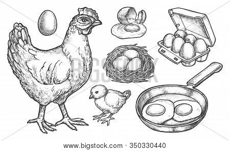 Chicken Products And Farm Poultry Food, Vector Sketch Icons. Hand Drawn Hen With Chick, Eggs Hatchin