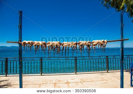 Freshly caught octopuses are dried in the sun , Amarynthos village, Evia, Greece.