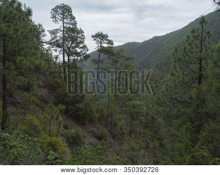 Valley At Mysterious Laurel Forest Laurisilva, Lush Subtropical Rainforest At Hiking Trail Los Tilos