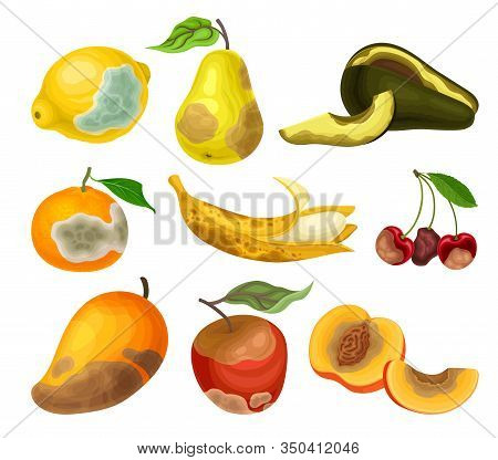 Rotten Fruits With Stinky Rot Covered The Skin Vector Set
