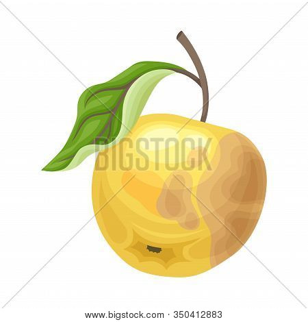 Spoiled And Rotten Apple Fruit With Skin Covered With Stinky Rot Vector Illustration