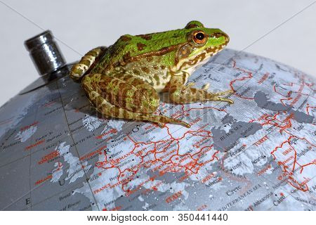Frog On Top Of A Terrestrial Globe Symbolizing The Historic Rivalry Between The English And The Fren