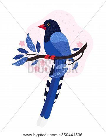 Taiwan Azure Magpie. Animals Of Taiwan. Urocissa Caerulea. Cute Blue Bird Sits On A Branch With Pink