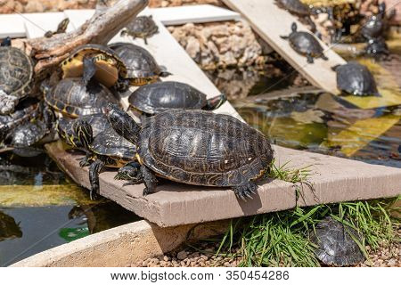 A Group Of Small Turtles Bask In The Sun