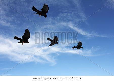 Birdsinflight