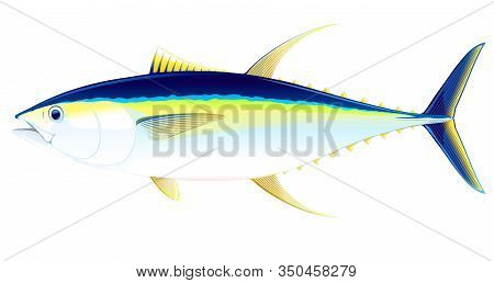 Yellowfin Tuna Fish In Side View, Realistic Sea Fish Illustration On White Background, Commercial An