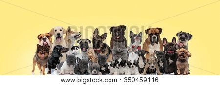 group of different animals panting and sticking out tongue on yellow background