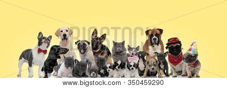 team of different breeds of animals panting, sticking out tongue, wearing bowtie and hats on yellow background
