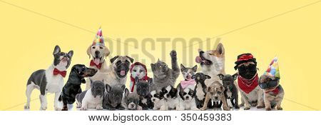 group of different animals panting, sticking out tongue, wearing sunglasses, hats and bowties on yellow background