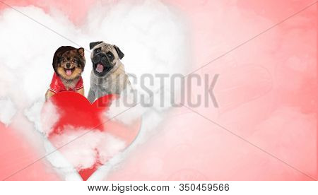 In love Pomeranian and Pug puppies wearing hat and jacket, panting and sitting on a love cloud behind a big heart on red background