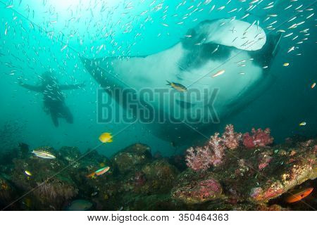 Giant Manta Ray and scuba diver
