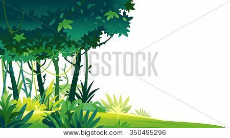 Wild Jungle Forest With Trees, Bushes And Lianas On White Background, Decorative Template Compositio