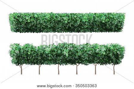 Realistic Garden Plant Fence. Nature Green Seasonal Bushes, Tree Crown Bush Foliage And Green Fence