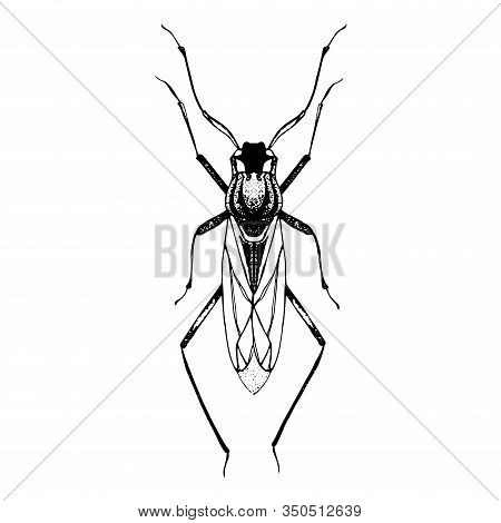 Hand Drawn Sketch Of Beetle With Wings. Vector Illustration Ofinsect. Black And White Entomological
